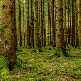 by Suada Zulkic - Landscapes Forests