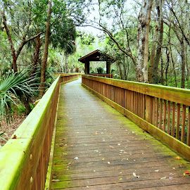 Boardwalk in Florida Park by Kathy Rose Willis - City,  Street & Park  City Parks ( wooden, park, green, florida, trees, brown, woods, boardwalk,  )