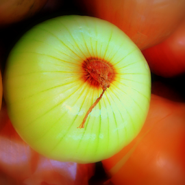 Onion by Dino Rimantho - Food & Drink Fruits & Vegetables