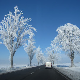 by Carmen Laura - Landscapes Travel ( car, winter, blue, frost )