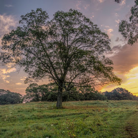 An Appleton Farm Tree at Sunrise by David Stone - Landscapes Sunsets & Sunrises ( field, clouds, appleton farm, morning light, tree, ipswich, sunrise )