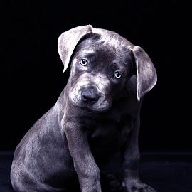 by Jenefer Zeitsch - Animals - Dogs Puppies