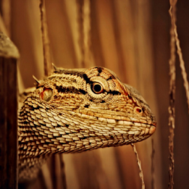 haiii ... i see you by Aris Susanto - Animals Reptiles