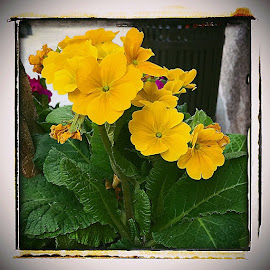 by Bill (THECREOS) Davis - Nature Up Close Gardens & Produce ( yellow, flowers, flower,  )