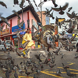 Feeding the pigeons by Ng Yannfae - City,  Street & Park  Street Scenes ( johor, life, asia, malaysia, street scene, people, man, culture, asian, street photography, city,  )