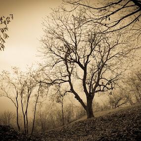 Nature  by Jean Bogdan Dumitru - Novices Only Landscapes