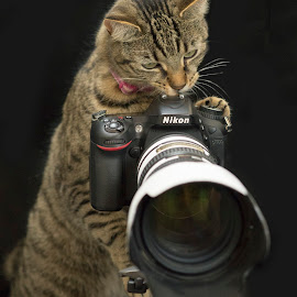 kitten Trying her hand at photography by Alex Sartain - Animals - Cats Playing