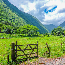 Waipio Valley 02 by Karen Martin - Landscapes Mountains & Hills ( fence, volcano, mountain, green, cloud forest, rain forest, forest, road, hawaii, gate )