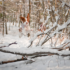 Leaping Logs by Colin Stewart - Animals - Dogs Running ( dog, madison, animal )