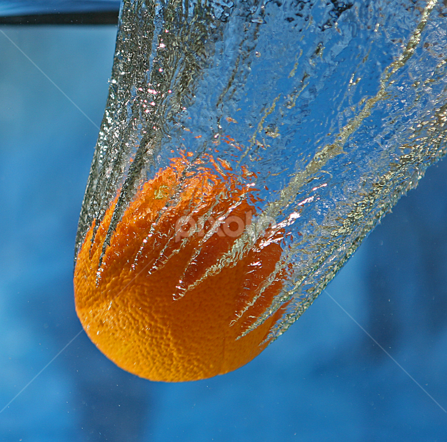 Hanging On by Gary Enloe - Food & Drink Fruits & Vegetables ( water, orange, fish, tank )