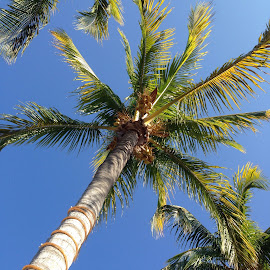 Blue Skies & Palm Trees by Amy Jackson - Instagram & Mobile iPhone ( vacation, florida, palm trees, blue skies, beach, iphone )