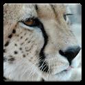 Deslize quebra-cabeça: Animal icon