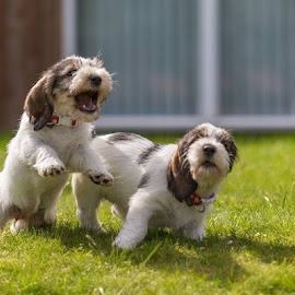 Hey there ;-) by Rune Helliesen - Animals - Dogs Puppies (  )