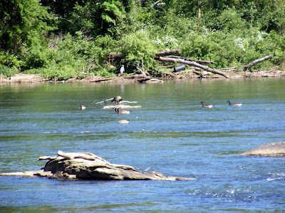 Ducks on the Hooch