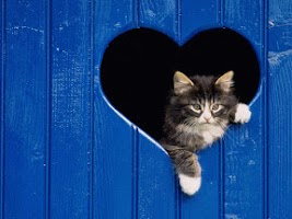 Screenshot of Cats Wallpapers