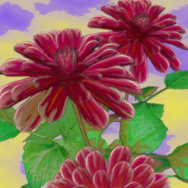 Red Dahlia Watercolor by Jerry Androy - Painting All Painting