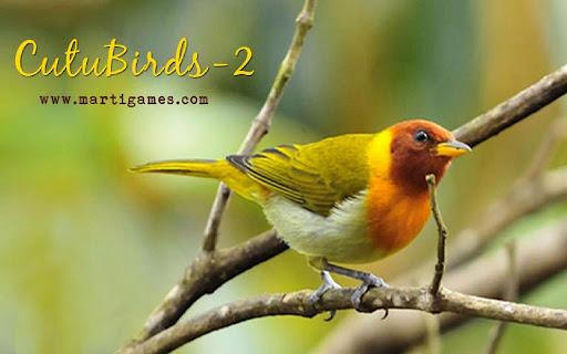 Cutu-Birds-2