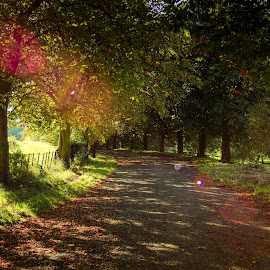 Morning light by Phil Newman - Novices Only Landscapes ( autumn, sunny, flare, light, woods )