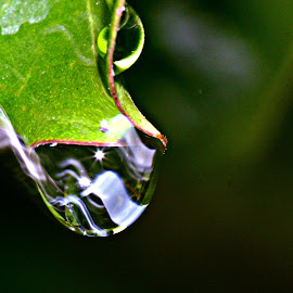 by George Drewry - Nature Up Close Water