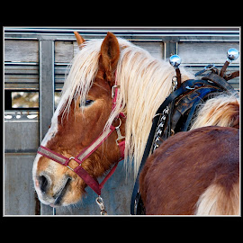 by Brad Warden - Animals Horses