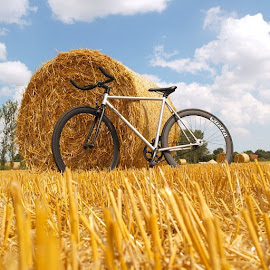 New bike...@quellabikes by Joseph Stone - Transportation Bicycles ( bike, bicycle, new, quella, quellabicycle, quellabikes, field, haybales, uk, edit, gold, jw, berrr, kings, neco, quando )