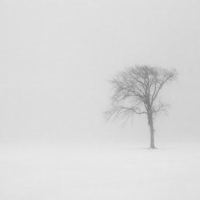 Loneliness by Jean Photo-Vigneault - Landscapes Weather