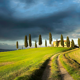 Casale by Paola Kervin - Landscapes Prairies, Meadows & Fields ( clouds, contrast, field, tuscany, sunset, cypress, italy )