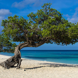 One Happy Island  by Toine Wessling - Landscapes Beaches