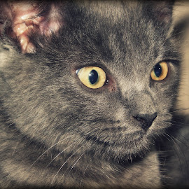 Cat Pose by Eric Wilmore - Animals - Cats Portraits