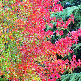 Autumn by Marco Poli - Nature Up Close Trees & Bushes ( fall, color, colorful, nature )