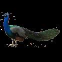 Peacock Sticker icon