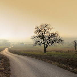 The road by Besnik Hamiti - Landscapes Prairies, Meadows & Fields ( dumnica, fog, kosovo, road, landscape, mist )