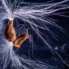 Take Flight by Eric Witt - Novices Only Macro ( plant, macro, nature, seed, flower, pod,  )