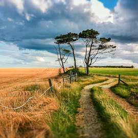 fields of gold by Martin Janowski - Instagram & Mobile iPhone ( clouds, wind, ireland, grass, green, whitegate, field, sky, tree, path, weather, trees, walk )