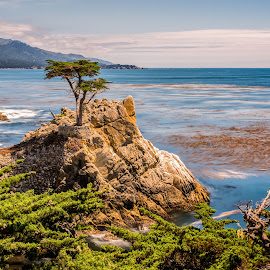The Lone Cypress by Jun Robato - Landscapes Travel ( california, pebble beach, 17-mile drive, landscapes, lone cypress )