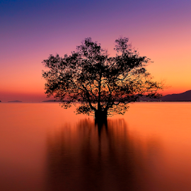 by Charliemagne Unggay - Landscapes Waterscapes ( reflection, tree, sunset, serene, mangrove )