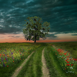 The Green Way... by Juliana  Nan - Landscapes Prairies, Meadows & Fields ( clouds, grass, green, colors, fine art, way, poppy, landscape, picture, field, sky, nature, tree, sunset )