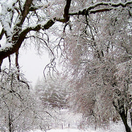 Snow Day by Susan McDermitt - Landscapes Weather ( snow, trees )