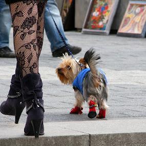 Posh girls by Name of Rose - City,  Street & Park  Street Scenes ( girls, yorkie, posh, street, feet, dog, walk, boots )
