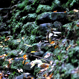 Rock Wall by Charles Shope - Nature Up Close Rock & Stone ( natural light, nature, color, moss, stone, hocking hills, leaves, rocks, wall )