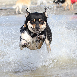 I beleive I can fly :) by Paul Dogman - Animals - Dogs Running (  )