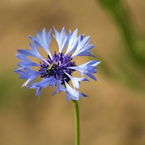 by Ashish Singla - Flowers Flower Buds