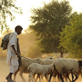 Life of Thar people by Fawad Hashmi - Landscapes Deserts ( , Travel, People, Lifestyle, Culture )