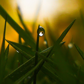 The Great Drop by Archit Sharma - Abstract Water Drops & Splashes ( droplet, green, drop, drops, leaf, yellow, garden, droplets )