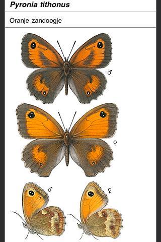 Vlinders van Nederland