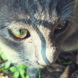 by Shanne Liebenberg - Animals - Cats Kittens