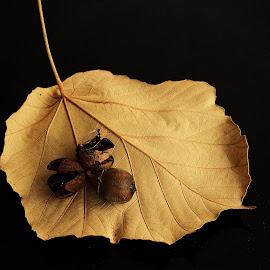 Leaf and Seeds by Prasanta Das - Nature Up Close Leaves & Grasses ( dry, seeds, leaf )
