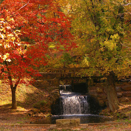 Autumn Bench by Bill Trenwith - City,  Street & Park  City Parks ( bench, autumn, fall, newlin grist mill, folige )