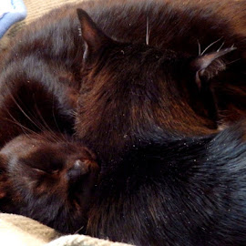 Kitty Pile of Love by Cherry Uhler - Animals - Cats Kittens