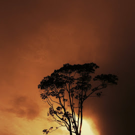 Alone by Shevenk Clv - Instagram & Mobile Android ( phone, android, tree, sunset, silhouette )